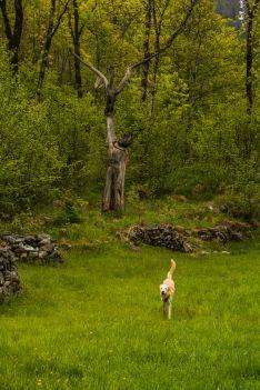 18-05-11 Valle Verzasca-2210